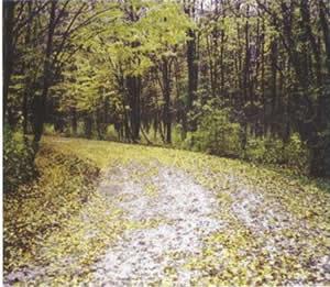 Il bosco di Muzzana